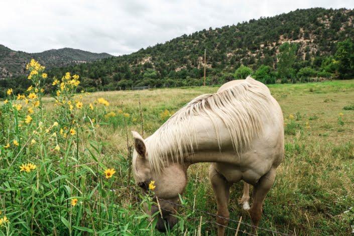 Cavallo libero nei campi