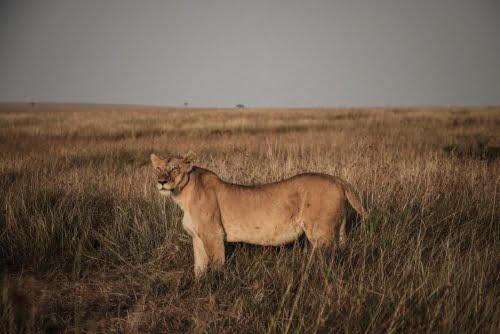 leonessa Kenya