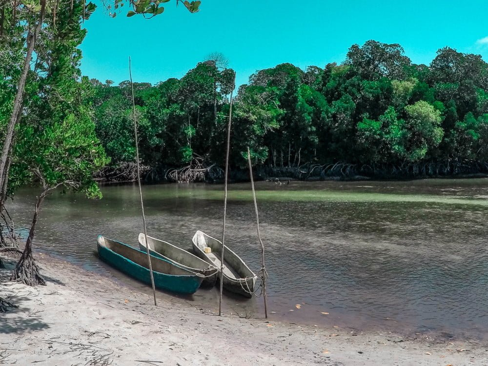 canoe e mangrovie