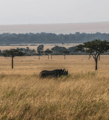 Rinoceronte Kenya